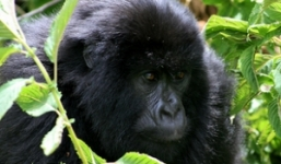 5 Days Wildlife & Gorillas in Uganda